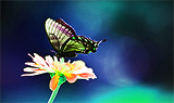 Happiness is a Butterfly of acceptance